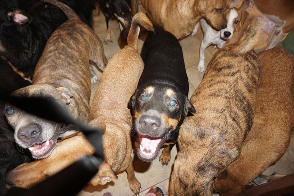 Perros felices de ser rescatados