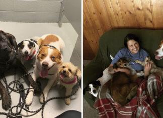 Perros no dejan sola a mama ni para ir al baño