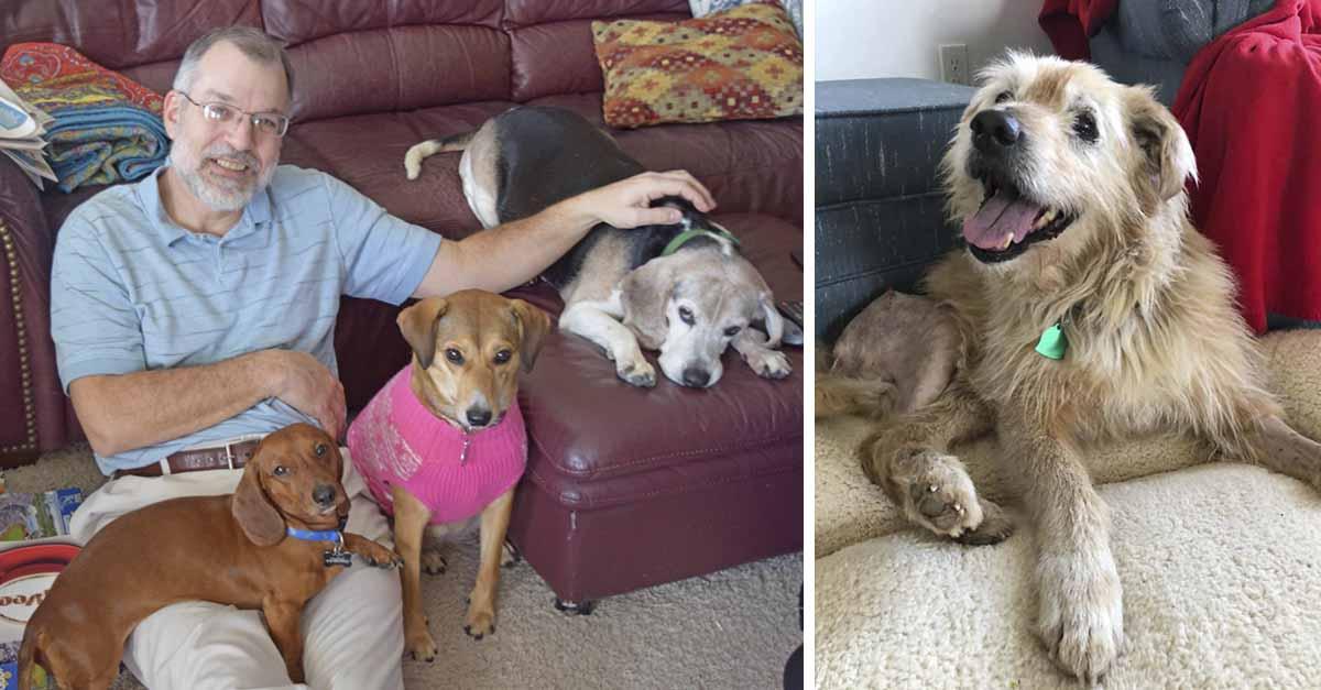 Perros que fueron abandonados por su vejez ahora recibirán cuidados