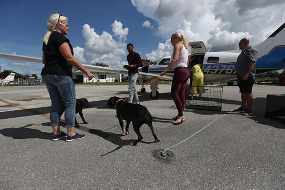 Perros y avión