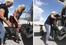 Piloto lleva animales a lugares seguros para escapar del huracán Dorian