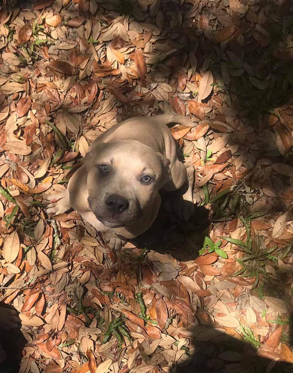 Zeus cachorro