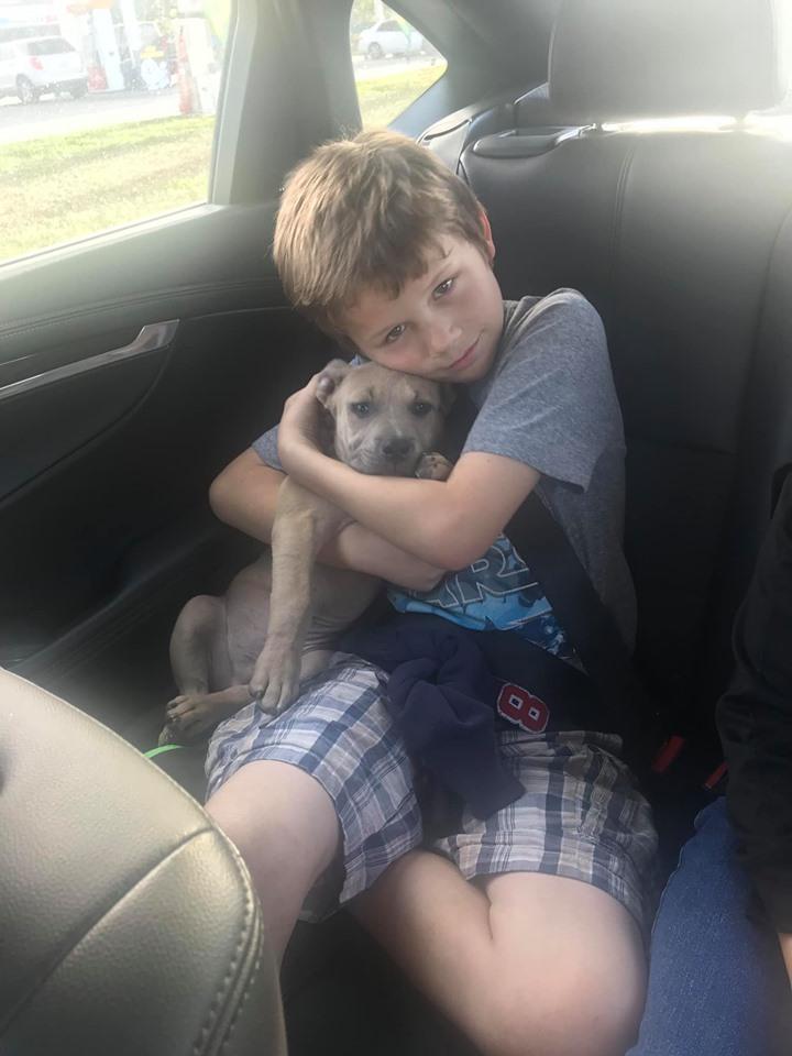 Zeus en el auto
