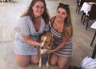 mujer en vacaciones regresa a casa con un perro que no se alejo de su lado