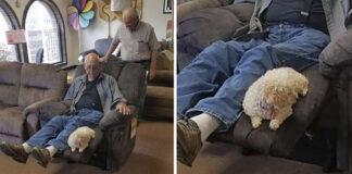Abuelo lleva a su perro a comprar una nueva silla