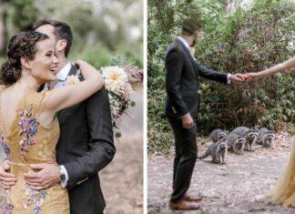 Adorables mapaches se cruzan en sesión fotográfica de una boda