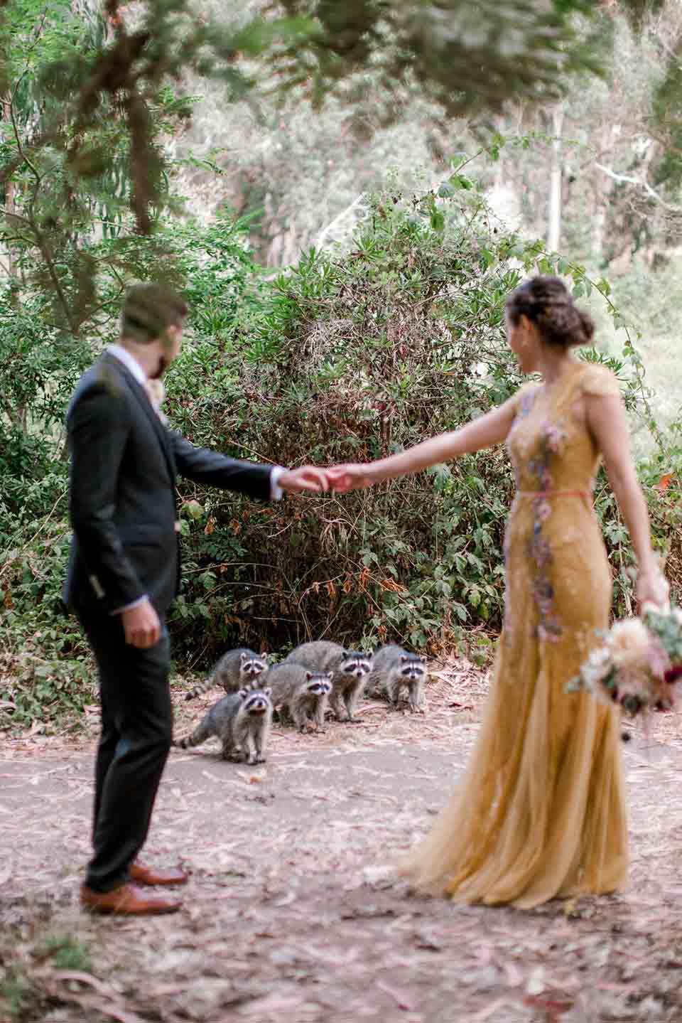 Aparecen mapaches en sesión de fotos
