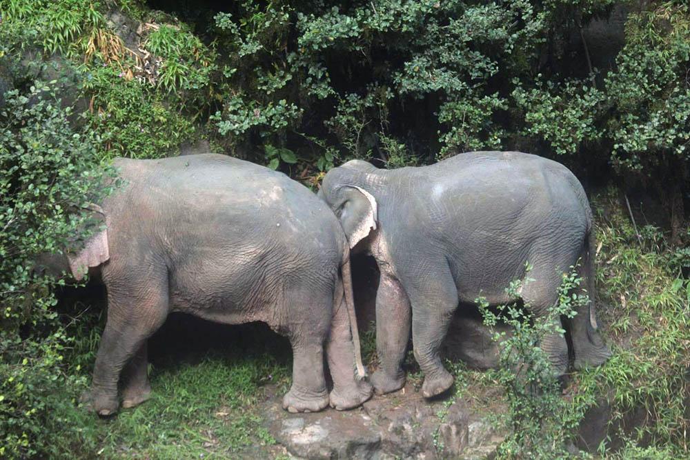 Dos elefantes sobreviven