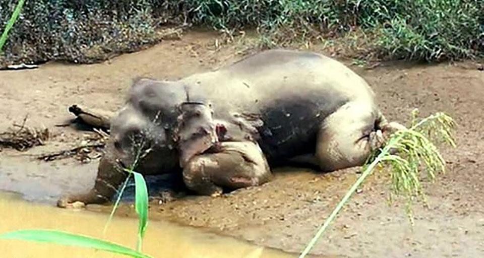 Elefante acribillado