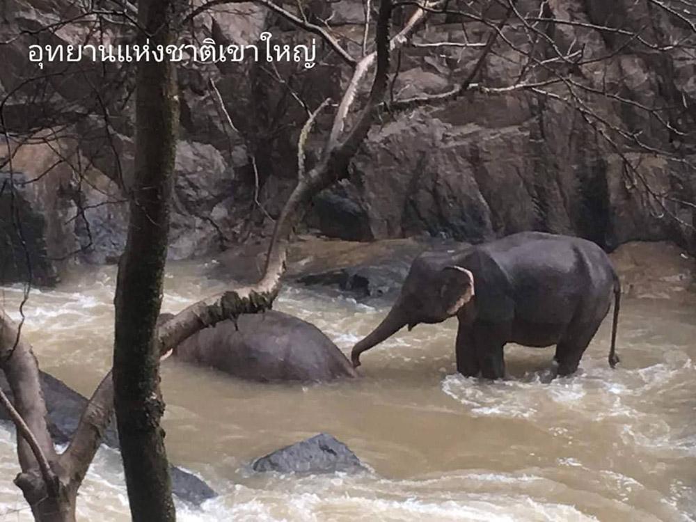 Elefante intenta revivir a su amigo