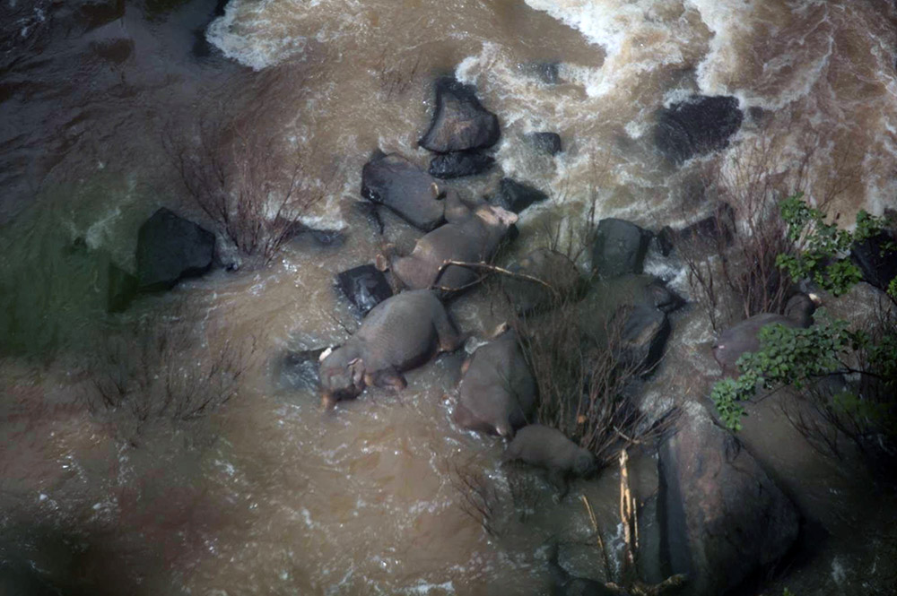 Elefantes mueren en el Parque Nacional de Khao Yai