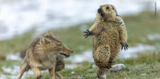 Ganadores de las mejores fotos de la vida silvestre en 2019