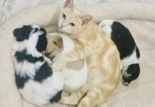 Gata adopta y cría a una camada de cachorros huérfanos