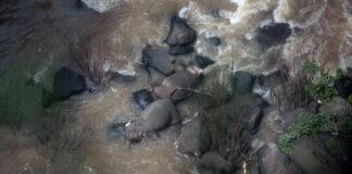 Grupo de elefantes muere tratando de salvar a un bebé que cayó de una cascada