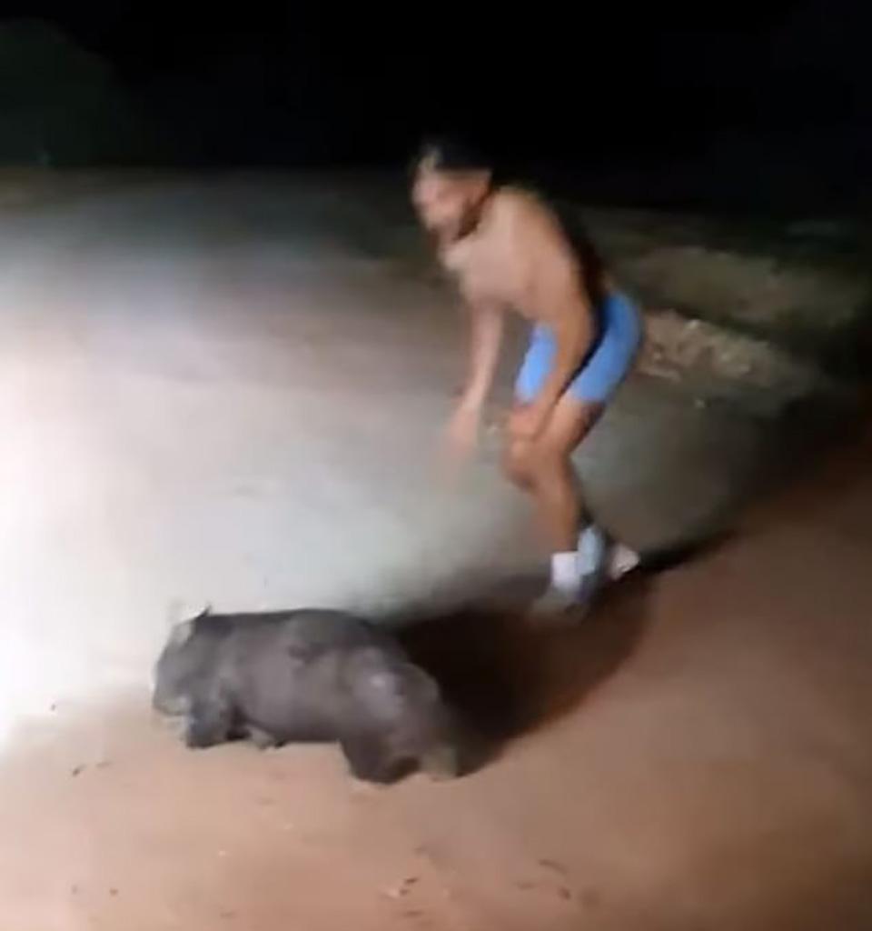 Hombre mata a wombat