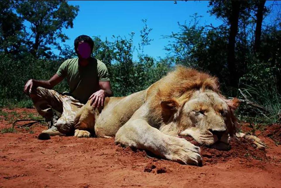 Hombre posa sobre león muerto