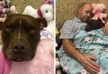 Hombre se mudó a refugio y ayudó a perrita que estuvo sola en 400 días
