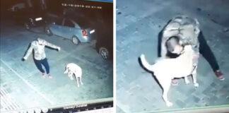 Hombre y perro comparten adorable baile