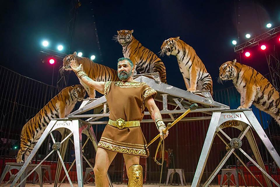 Hombre y tigres en el circo