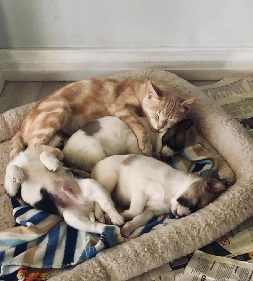 Kathryn con sus cachorros adoptivos