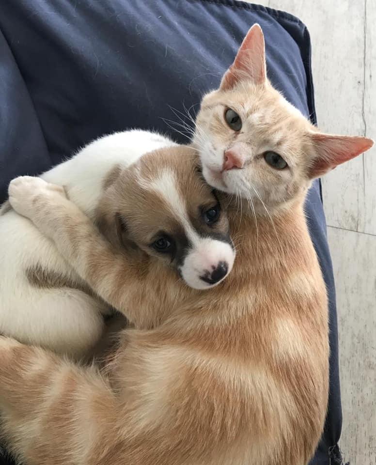Kathryn y un cachorro