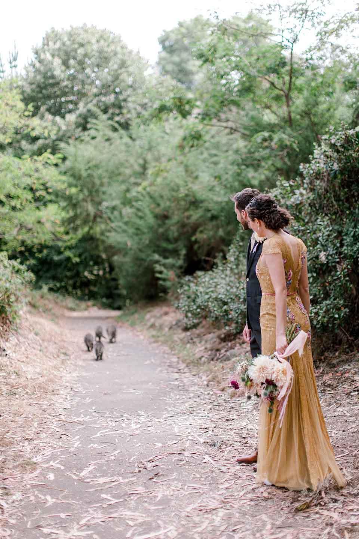 Mapaches siguen su camino mientras pareja los observa