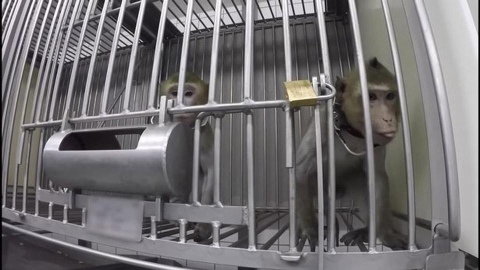 Mono enjaulado