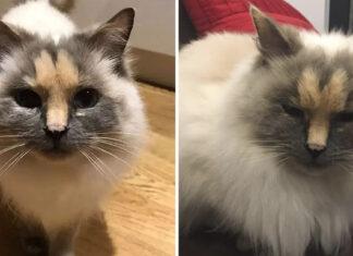 No querían adoptar a esta gata con raras marcas en su rostro