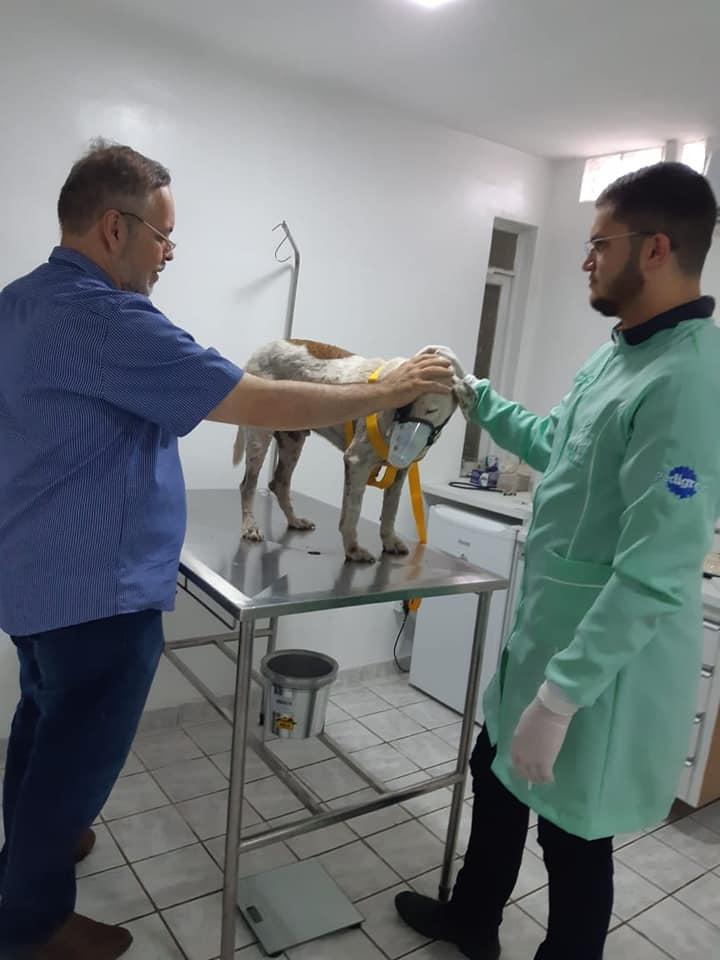 Padre lleva perro al veterinario