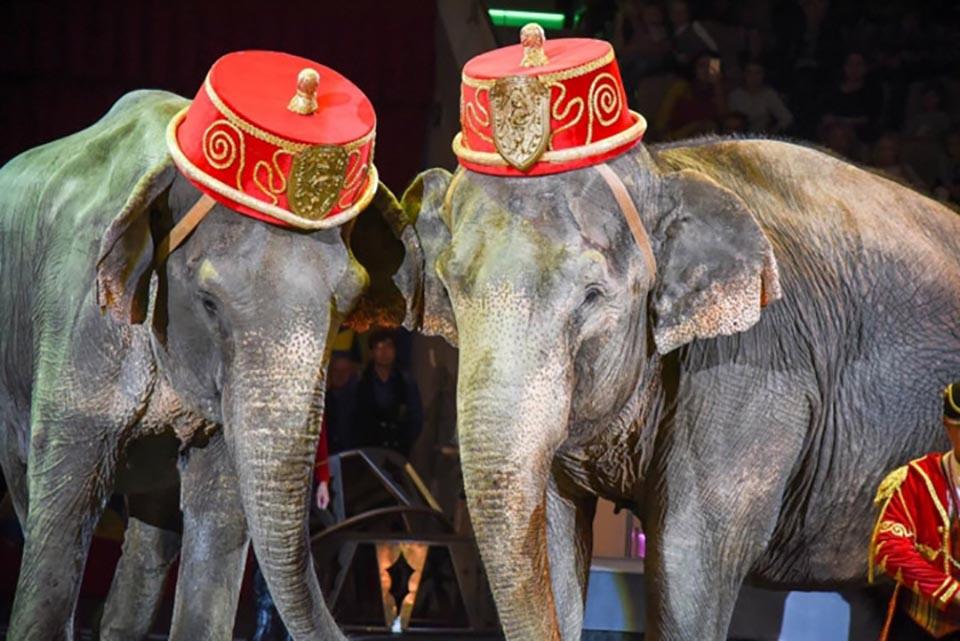 Par de elefantes en circo