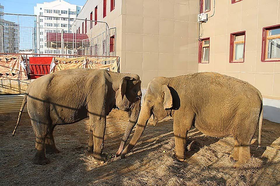 Par de elefantes