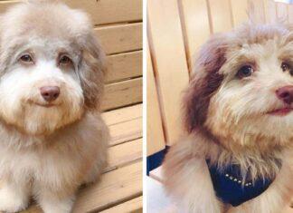 Perrito adorable tiene un rostro único que se asemeja al de un humano