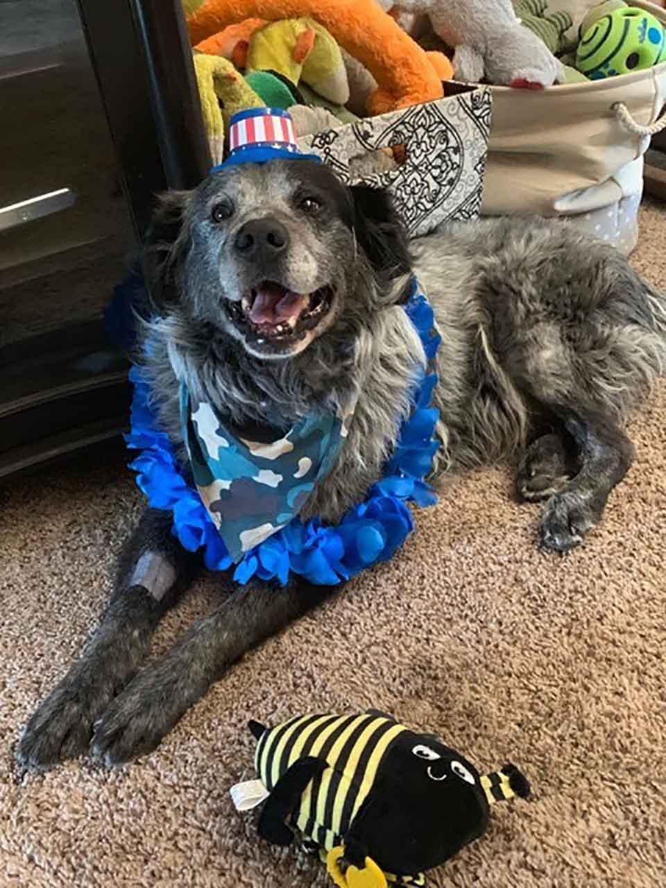 Perrito con atuendo azul