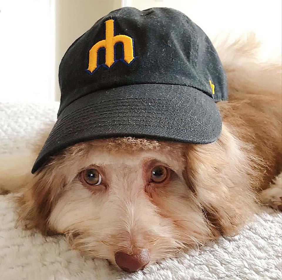 Perrito con gorra