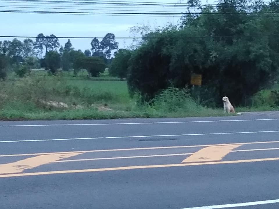 Perrito desde el otro lado de la carretera espera a sus dueños