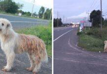 Perrito perdido esperó cuatro años hasta que su familia lo encontró