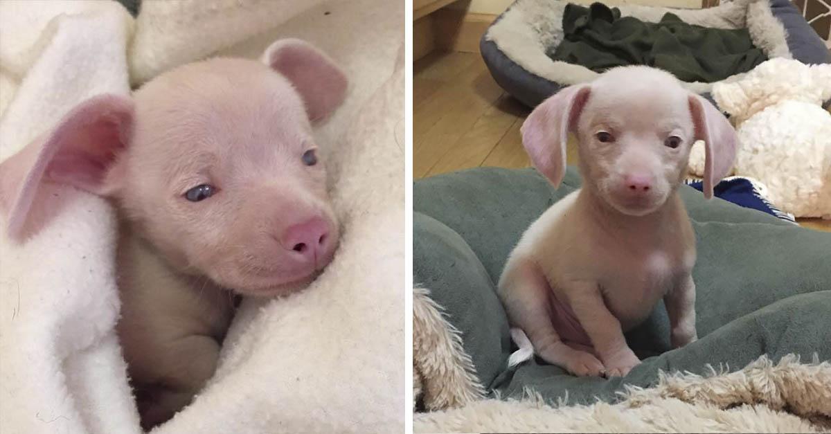Perrito rosa está inspirando a los niños a como lidiar con sus diferencias