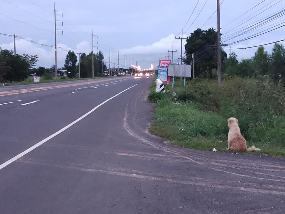 Perrito se sienta a esperar a su familia durante cuatro años