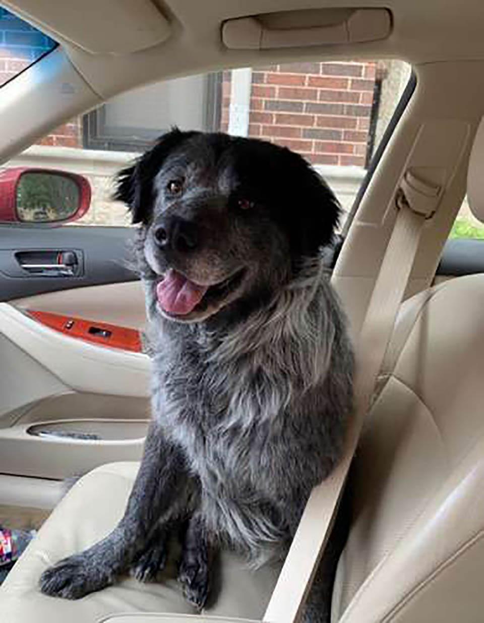 Perrito sonríe en el auto