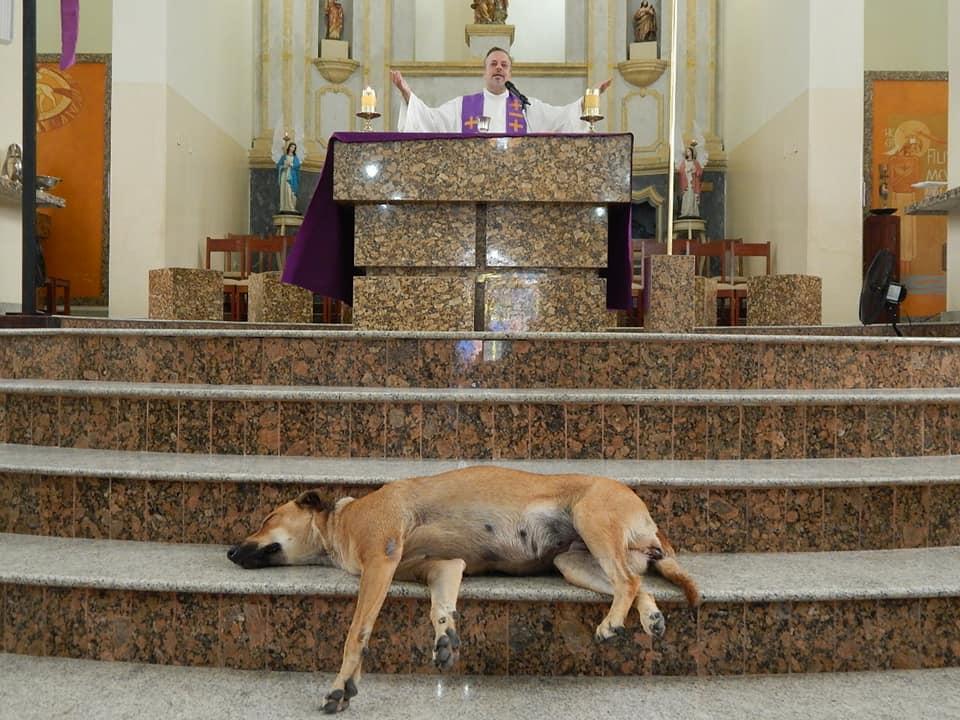Perro en misa