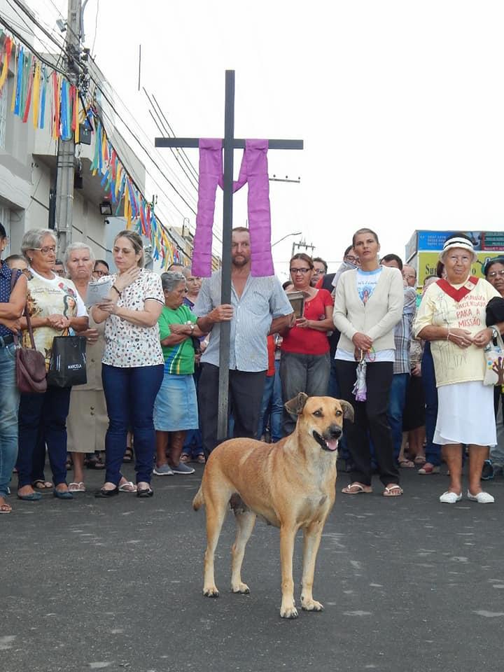 Perro en una procesión