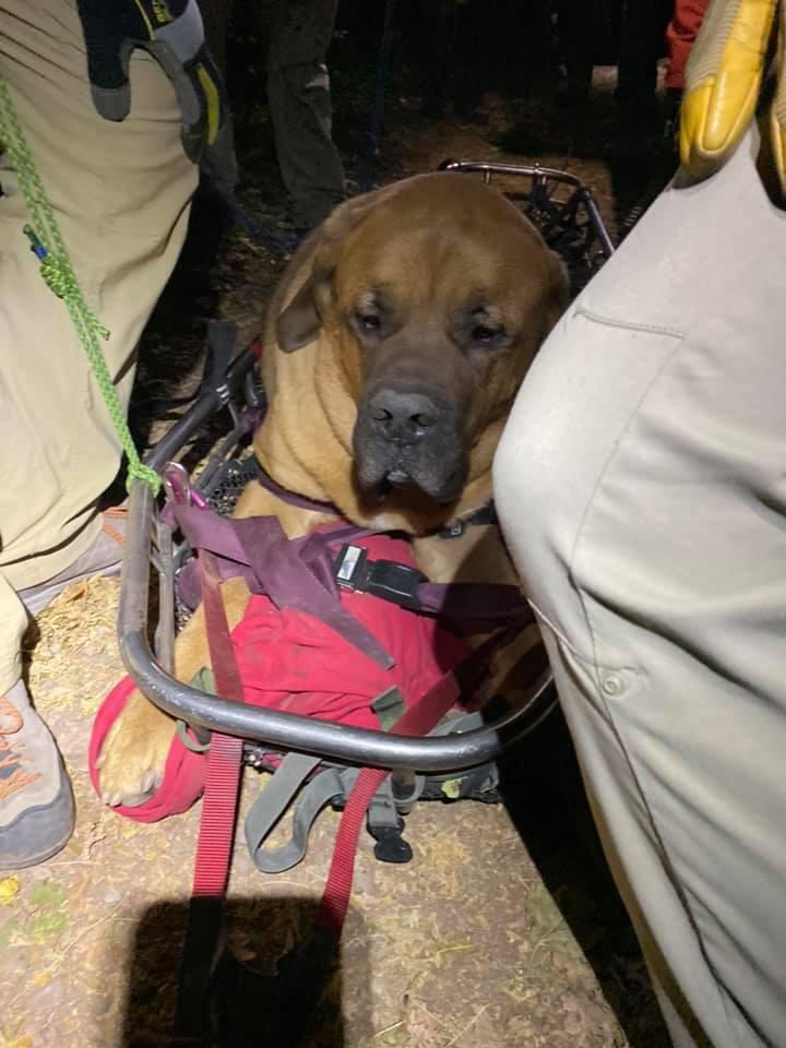 Perro enorme se cansa caminando en la montaña