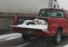 Perro es dejado en la parte trasera de una camioneta durante la nieve