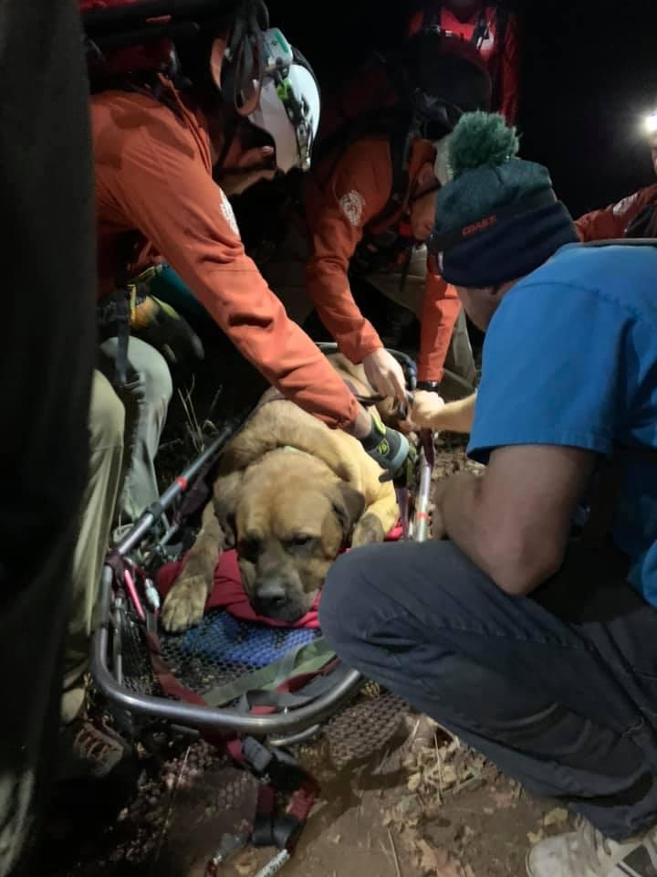 Perro rescatado de montaña