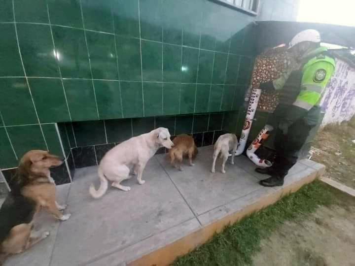 Perros hacen fila para alimentarse en Perú