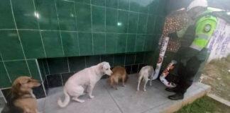 Perros sin hogar hacen fila para alimentarse