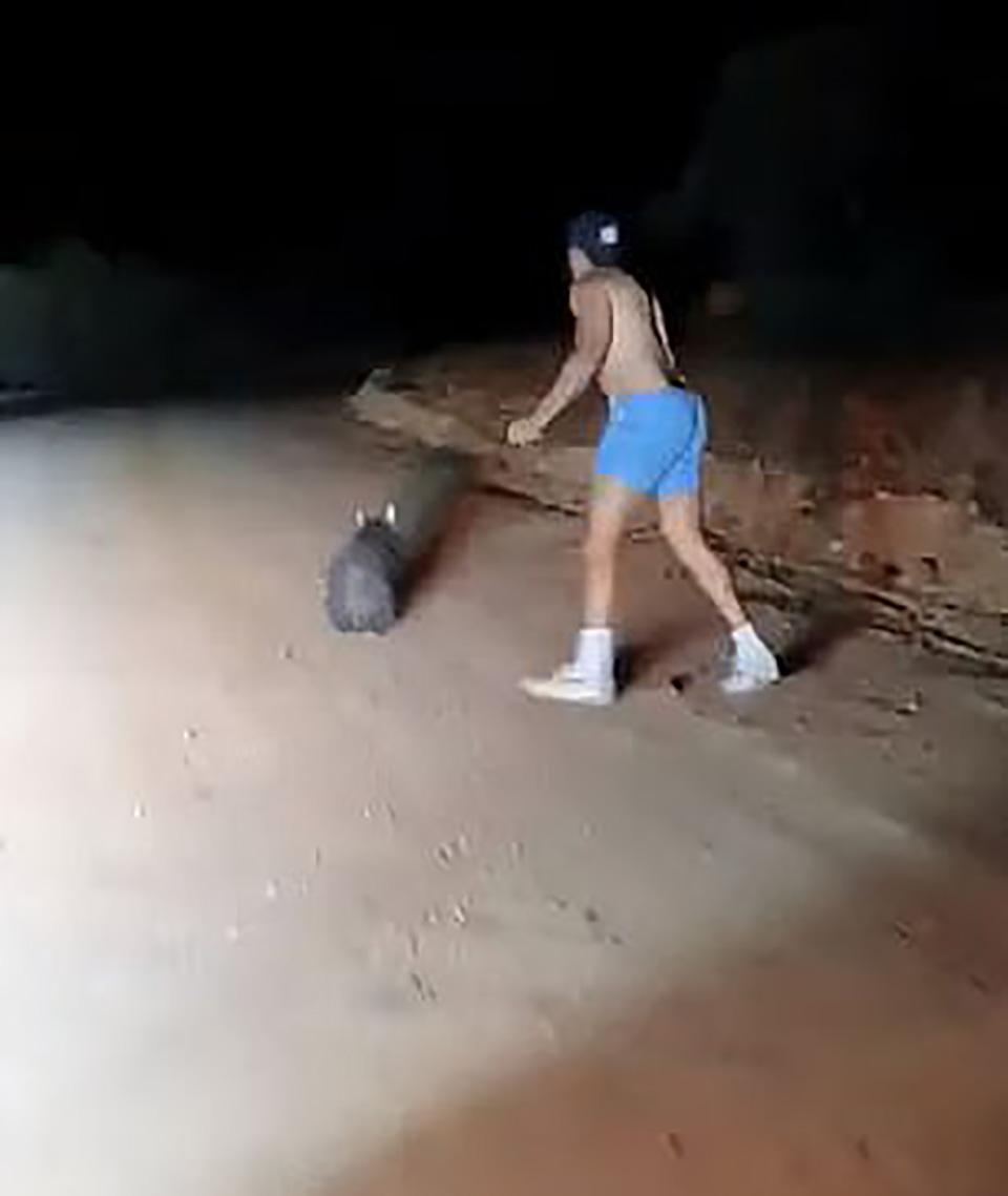 Policía corre con piedra en la mano para matar a wombat