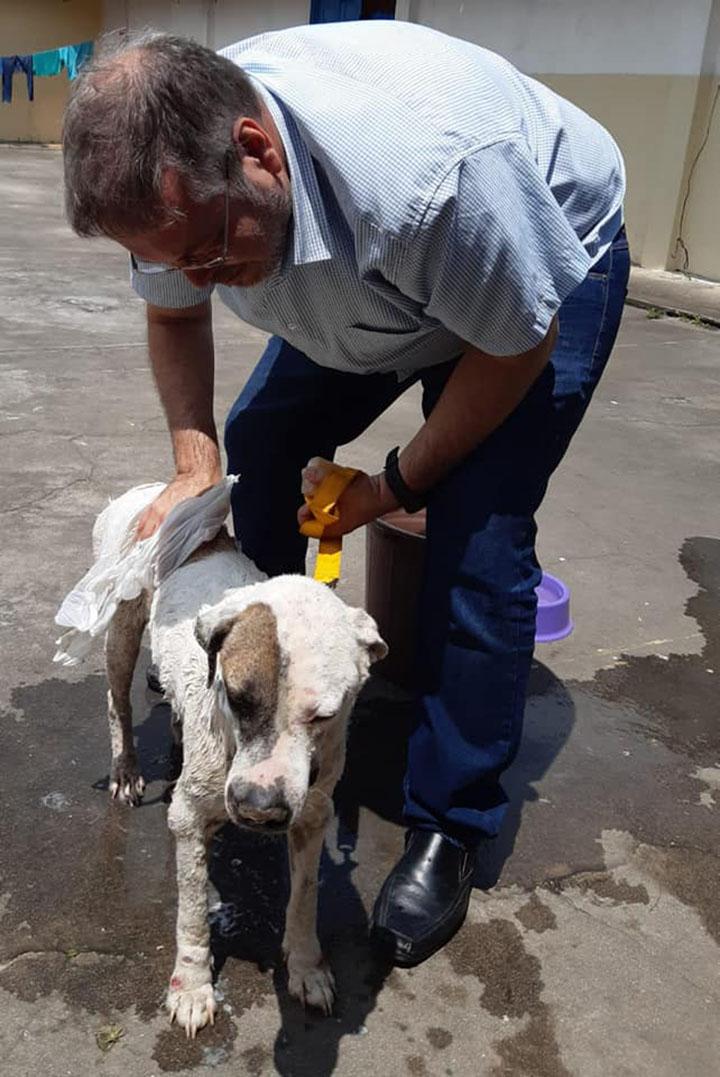 Sacerdote brasileño rescata perro