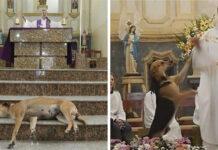 Sacerdote lleva perros a misa para que encuentren un hogar