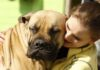 Tener un perro puede reducir el riesgo de morir prematuramente